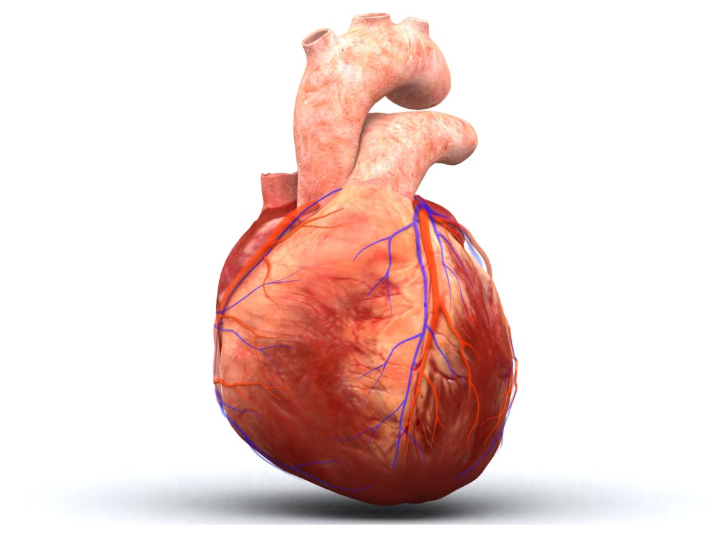 Real human heart images - photo#17